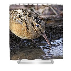 Streamside Woodcock Shower Curtain by Timothy Flanigan