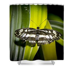 Stripes On Stipes Shower Curtain by Jean Noren