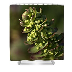 Succulent Shower Curtain by Joy Watson