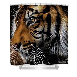 Sumatran Tiger Profile Shower Curtain by Jurek Zamoyski