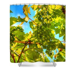 Sun Kissed Green Grapes Shower Curtain by Eti Reid