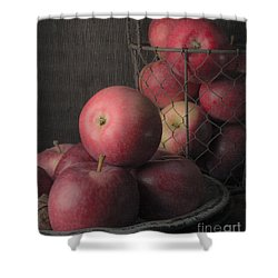 Sun Warmed Apples Still Life Standard Sizes Shower Curtain by Edward Fielding