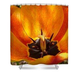 Sunburst Orange  Peach Blossom Shower Curtain by Lingfai Leung