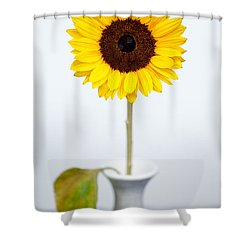 Sunflower Shower Curtain by Dave Bowman