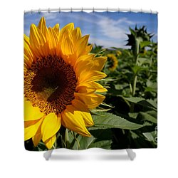 Sunflower Glow Shower Curtain by Kerri Mortenson
