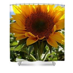 Sunflower Highlight Shower Curtain by Kerri Mortenson