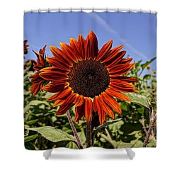 Sunflower Sky Shower Curtain by Kerri Mortenson