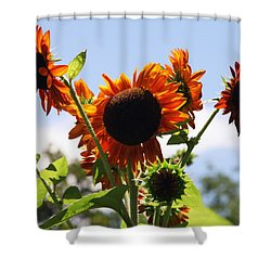 Sunflower Symphony Shower Curtain by Karen Wiles