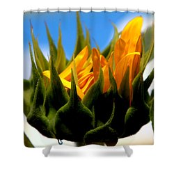 Sunflower Teardrop Shower Curtain by Karen Wiles