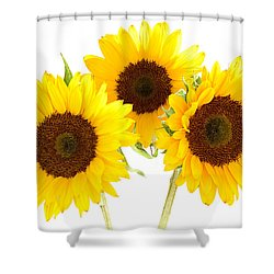 Sunflowers Shower Curtain by Claudio Bacinello
