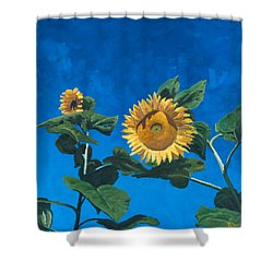 Sunflowers Shower Curtain by Marco Busoni