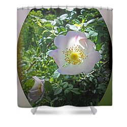 Sunlight On The Wild Pink Rose Shower Curtain by Patricia Keller