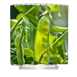 Sunlit Bounty Shower Curtain by Cheryl Baxter
