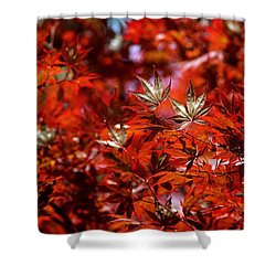 Sunlit Japanese Maple Shower Curtain by Rona Black