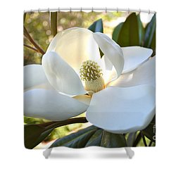 Sunlit Southern Magnolia Shower Curtain by Carol Groenen