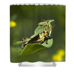 Sunny Green Grasshopper Shower Curtain by Christina Rollo