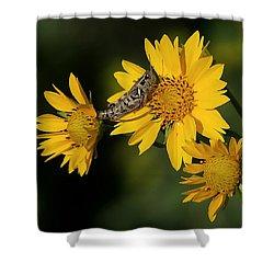 Sunny Hopper Shower Curtain by Ernie Echols