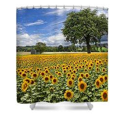 Sunny Sunflowers Shower Curtain by Debra and Dave Vanderlaan