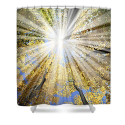 Sunrays In The Forest Shower Curtain by Elena Elisseeva