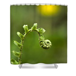 Sunrise Spiral Fern Shower Curtain by Christina Rollo