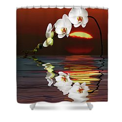 Sunset Orchids Shower Curtain by Angela A Stanton