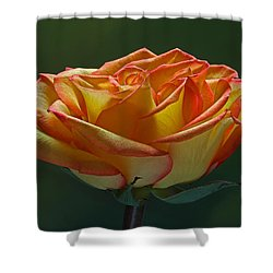 Sunshine On My Shoulders Shower Curtain by Juergen Roth