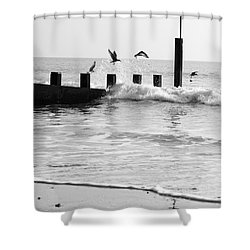 Surprised Seagulls Shower Curtain by Anne Gilbert