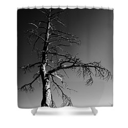 Survival Tree Shower Curtain by Chad Dutson