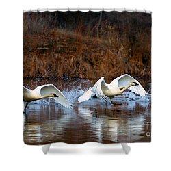 Swan Lake Shower Curtain by Mike  Dawson