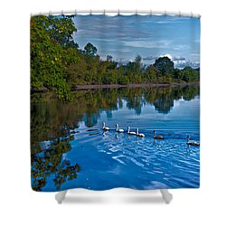 Swanny River Shower Curtain by Karol Livote