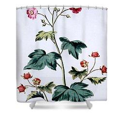 Sweet Canada Raspberry Shower Curtain by John Edwards