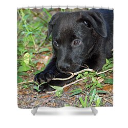 Sweet Puppy Shower Curtain by Aimee L Maher Photography and Art Visit ALMGallerydotcom