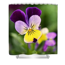 Sweet Violet Shower Curtain by Rona Black