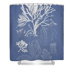 Symphocladia Gracilis  Shower Curtain by Aged Pixel