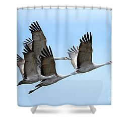 Synchronized Shower Curtain by Mike Dawson