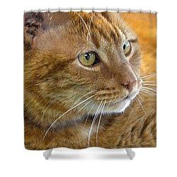 Tabby Cat Portrait Shower Curtain by Sandi OReilly