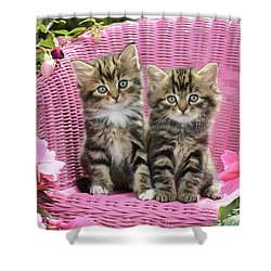 Tabby Kittens Shower Curtain by Greg Cuddiford
