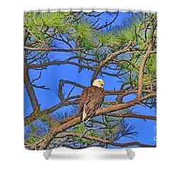 Taking A Nest Break Shower Curtain by Deborah Benoit