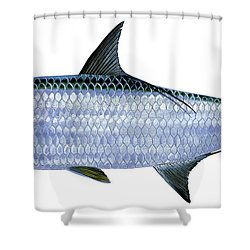 Tarpon Shower Curtain by Carey Chen