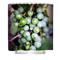 Taste Of Nature Shower Curtain by Karen Wiles