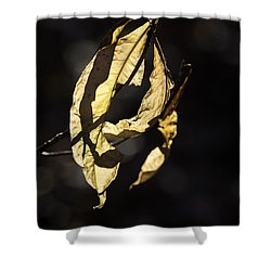 Tattered Leaf Shower Curtain by Fran Gallogly