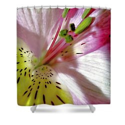 Tender Lily With Shadow  Shower Curtain by Danielle  Parent