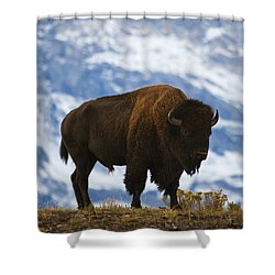 Teton Bison Shower Curtain by Mark Kiver