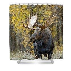 Teton Bull Moose Shower Curtain by Gary Langley
