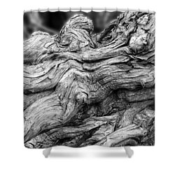 Textures Of Nature Black And White Shower Curtain by Jack Zulli