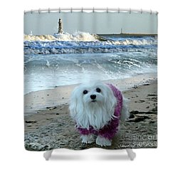 The Beach In Winter Shower Curtain by Morag Bates