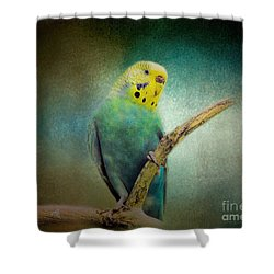 The Budgie Collection - Budgie 1 Shower Curtain by Jai Johnson