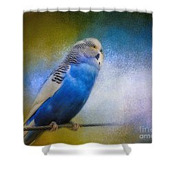 The Budgie Collection - Budgie 2 Shower Curtain by Jai Johnson