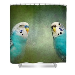 The Budgie Collection - Budgie Pair Shower Curtain by Jai Johnson