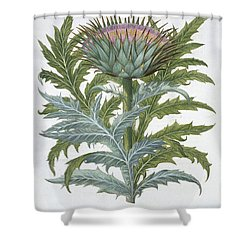The Cardoon, From The Hortus Shower Curtain by German School